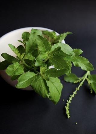 thai holy basil-3252159_640