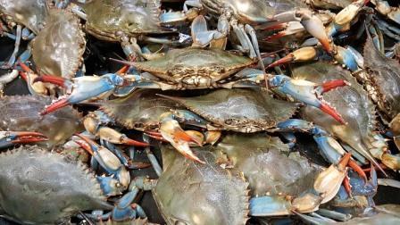 blue crab-2124136_640
