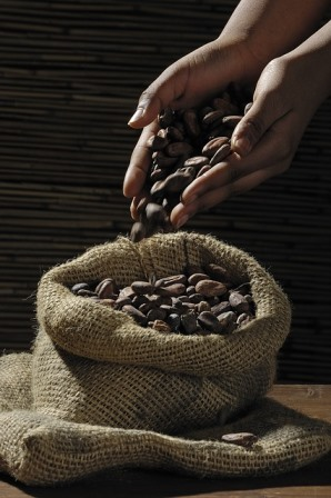 cocoa-beans-499970_640