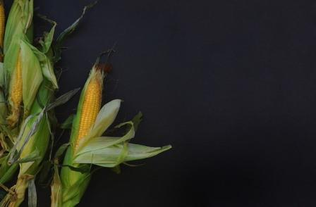 corncob-1031202_640