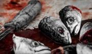 fish heads-1056594_640