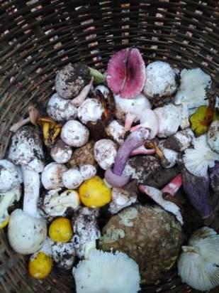 foraged mushrooms 2